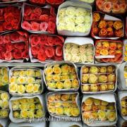 foto per floricultura agricoltura giardini terreni il bello nella natura arte floreale orticolario como varese milano
