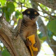 foto turismo Madagascar Nosy-be lemuri vari animali natura como varese milano